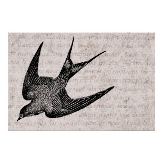 Illustration vintage d'hirondelle - oiseau 1800's  posters