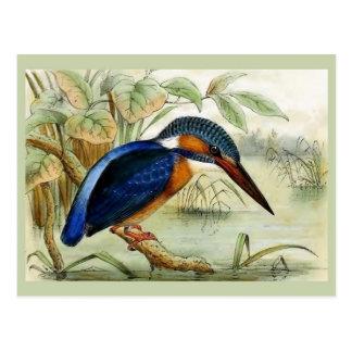 Illustration vintage d'oiseau de martin-pêcheur carte postale