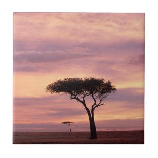 Image de silhouette d'arbre d'acacia au lever de carreau
