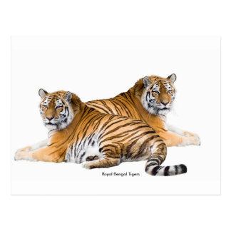 Image de tigre pour la carte postale