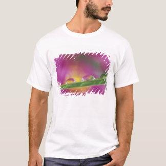 Image des asters formés dans des gouttelettes t-shirt