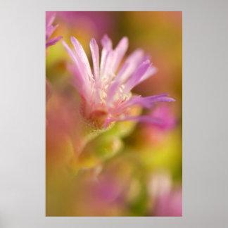 Image diffuse d'une fleur succulente colorée