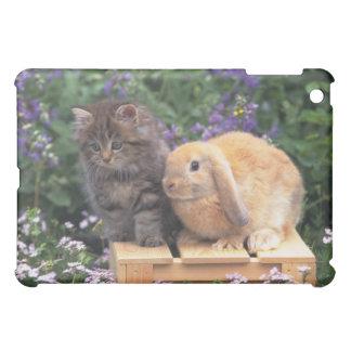 Image d'un chaton et d'une position de lapin coque iPad mini