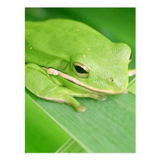 Image d'une carte postale de grenouille d'arbre