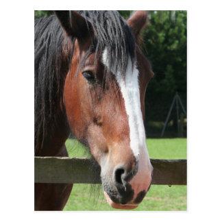 Image d'une carte postale quarte de cheval