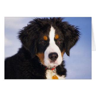 Image mignonne de chiot de chien de montagne de cartes de vœux