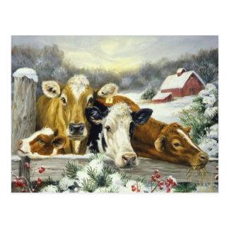 Image vintage de vache cartes postales