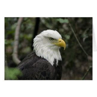 IMG_0673-eagle_5x7 Cartes