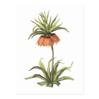 impérial de couronne (imperialis de Fritillaria) Carte Postale