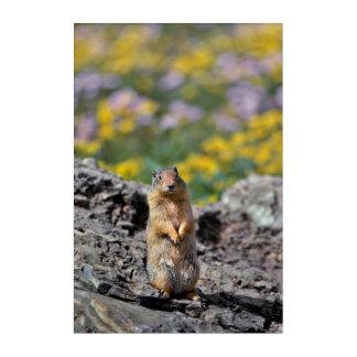 Impression En Acrylique Alerte d'écureuil moulu pour le danger