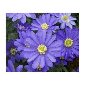 Impression En Acrylique Anémones bleues florales