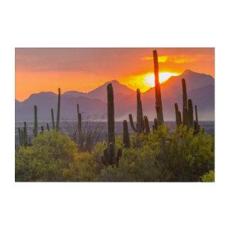 Impression En Acrylique Coucher du soleil de cactus de désert, Arizona