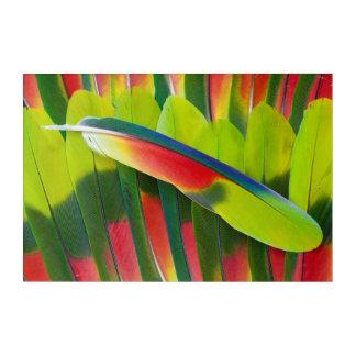 Impression En Acrylique D'Amazone de perroquet de plume toujours la vie