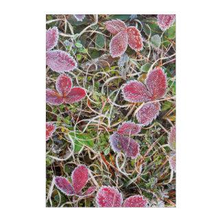 Impression En Acrylique Frost a couvert le feuille, Canada
