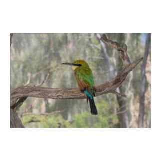 Impression En Acrylique Oiseau d'abeille-mangeur d'arc-en-ciel, Australie