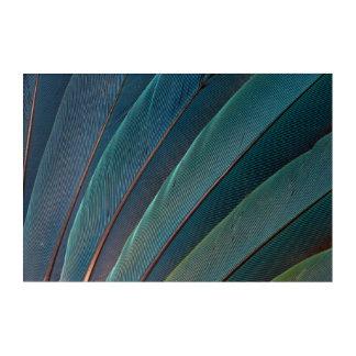 Impression En Acrylique Plume de perroquet d'ara d'écarlate