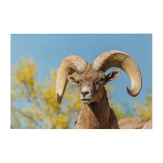 Impression En Acrylique RAM de Bighorn de désert