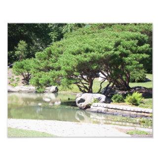 """Impression Photo 11"""" x 14"""" bel arbre se penchant au-dessus d'un"""