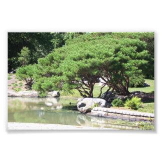 """Impression Photo 6"""" x 4"""" bel arbre se penchant au-dessus d'un étang"""