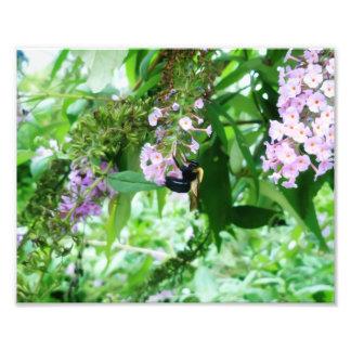 Impression Photo Abeille de charpentier orientale sur la fleur de