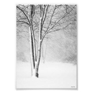 Impression Photo Abrégé sur voile blanc d'arbre de Milou de tempête