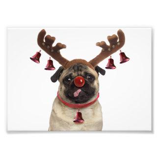 Impression Photo Andouillers de carlin - carlin de Noël - Joyeux