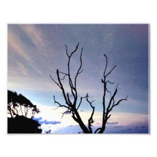 Impression Photo Arbre solitaire sur le rivage