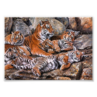 Impression Photo Art de petit-tigre de famille-tigre de