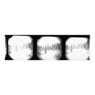 Impression Photo Art du nord de mur du lac Tahoe de pins de Milou