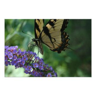 Impression Photo Beau papillon de machaon de tigre sur la fleur