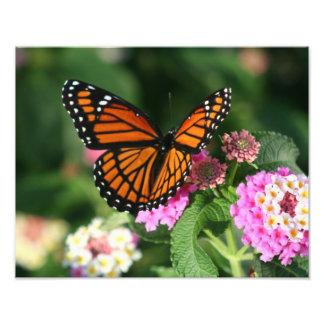 Impression Photo Beau papillon sur la fleur de Lantana