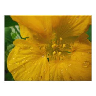 Impression Photo beauté vibrante lumineuse rustique de deux tons