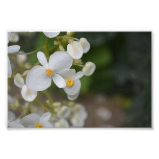 Impression Photo Bébé floral