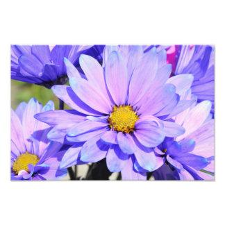 Impression Photo Bouquet de ressort