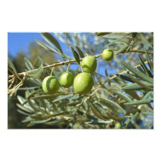 Impression Photo Branche d'olivier
