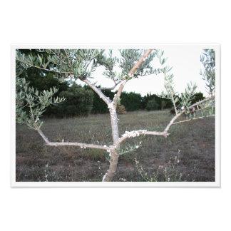 Impression Photo Branches d'olivier avec escargot