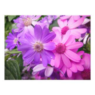 Impression Photo buisson rose pourpre de beauté vibrante lumineuse