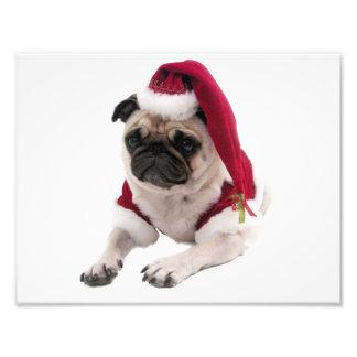 Impression Photo Carlin de Noël - chien du père noël - poursuivez