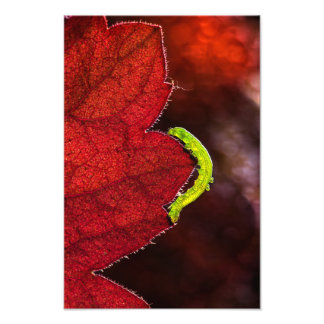 Impression Photo Caterpillar