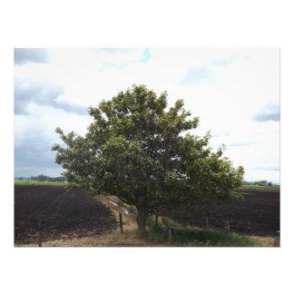 Impression Photo champs d'arbre de ferme