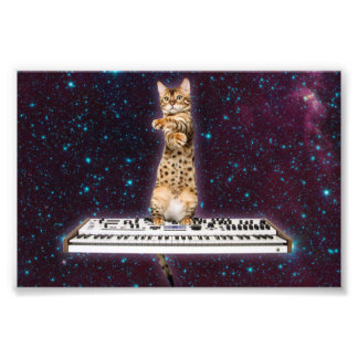 Impression Photo chat de clavier - chats drôles - amoureux de les