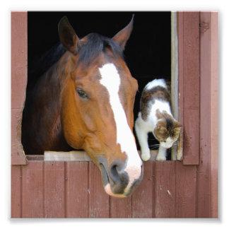 Impression Photo Chat et cheval - ranch de cheval - amants de
