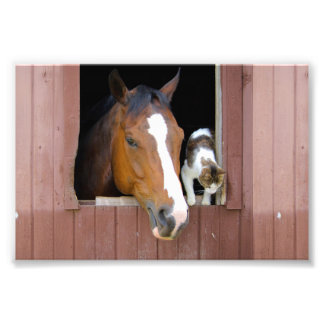 Impression Photo Chat et cheval - ranch de cheval - amants de