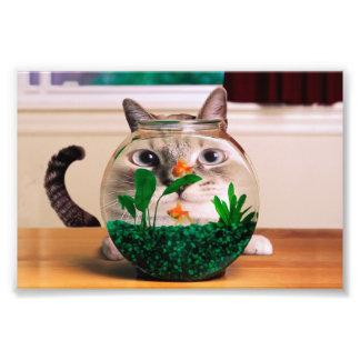 Impression Photo Chat et poissons - chat - chats drôles - chat fou