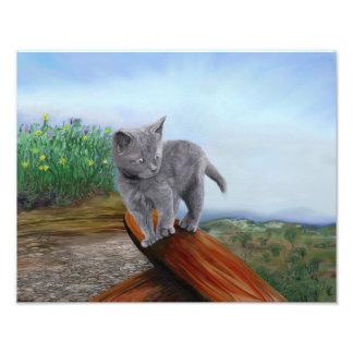 Impression Photo Chat scaredy mignon de chaton gris d'impression