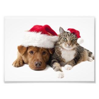 Impression Photo Chats et chiens - chat de Noël - chien de Noël