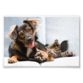 Impression Photo Chats et chiens - chien drôle - chats drôles