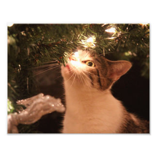 Impression Photo Chats et lumières - chat de Noël - arbre de Noël