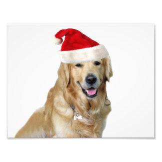 Impression Photo Chien-animal familier de Labrador Noël-père Noël