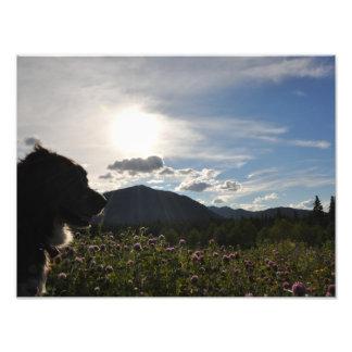 Impression Photo Chien en fleurs de montagne